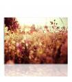 Cuadro campo de flores