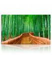 Cuadro bosque de bambú